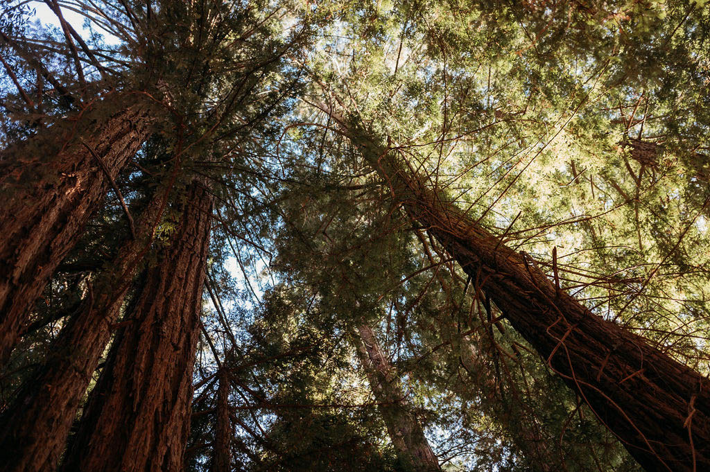 San Franscisco Same-Sex Elopement - California Redwoods - Dancing With Her