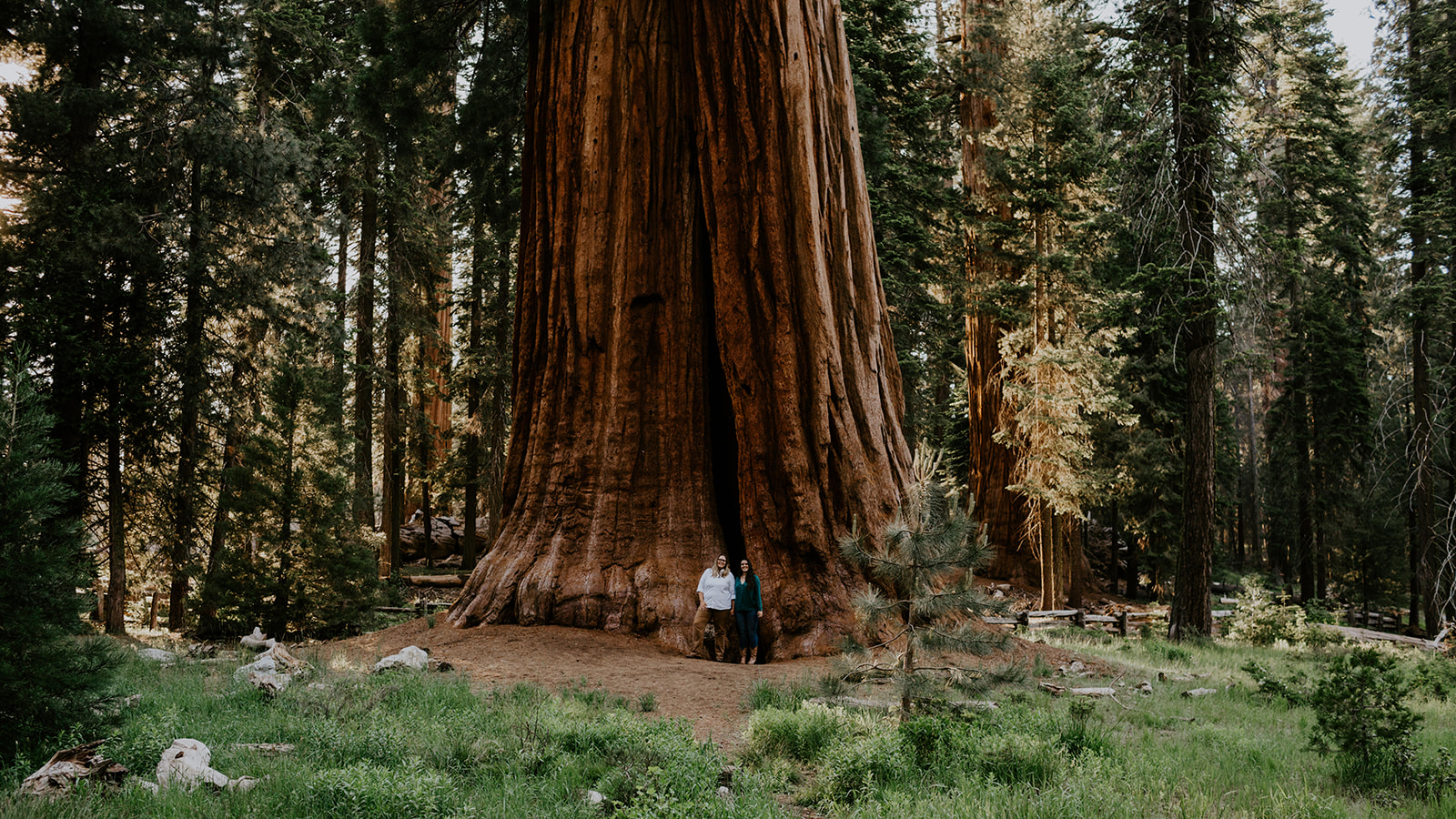 Sequoia National Park Engagement Trees & Seas Photography lesbian lgbtqia couple proposal Dancing With Her